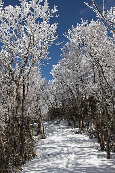 気持ちの良い樹氷ロード