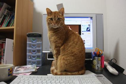 パソコンの前に立ちはだかる虎太