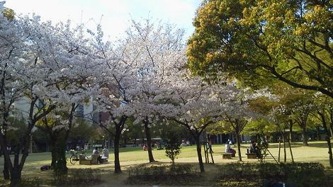 花2011 02