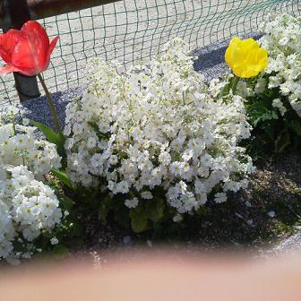 花2011 14