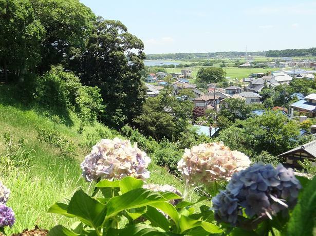 印旛沼とアジサイ