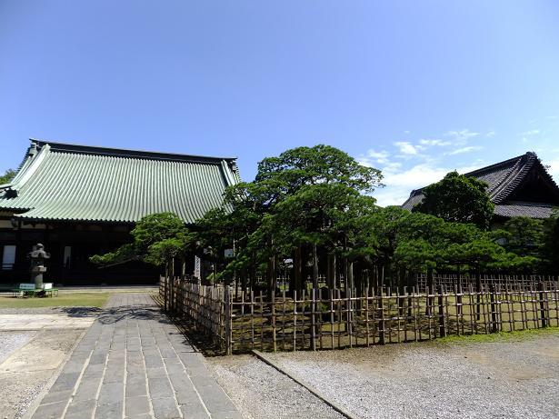 新田寺と松