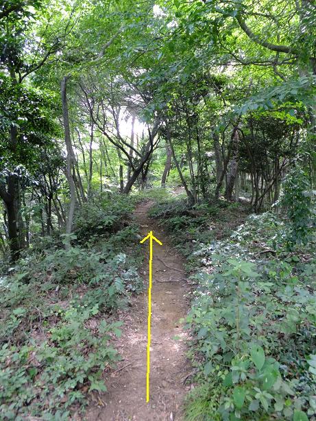 八王子山への登り道