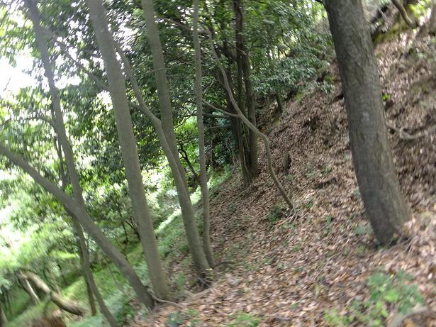 八王子山の斜面