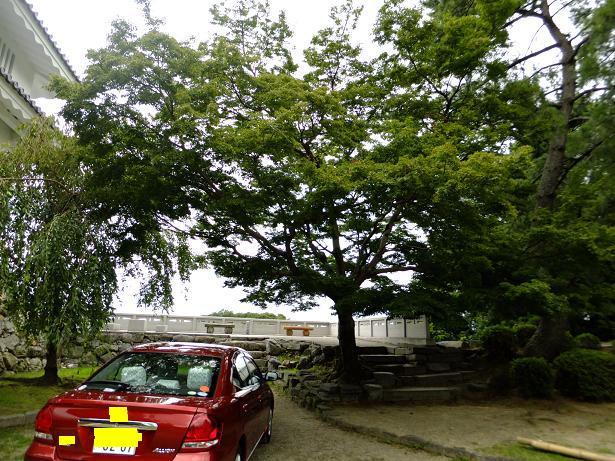 吉田城の紅葉