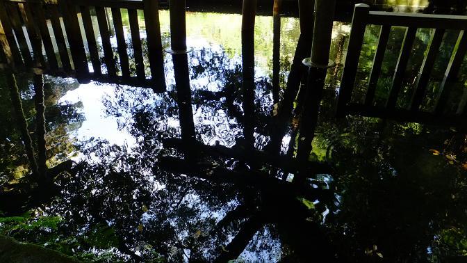 御手洗の池3