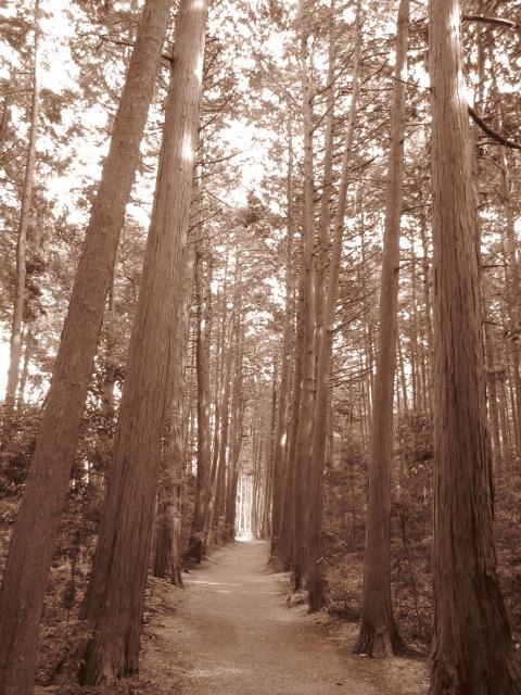 宇喜田陣への道