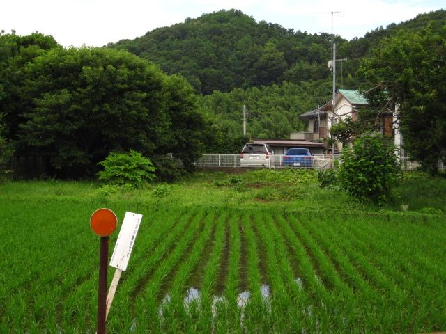 大山の麓・水田