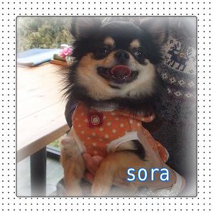 sora.png