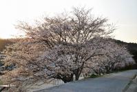 実家の春7