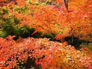 東福寺IMG_0875