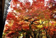東福寺DSC_0607