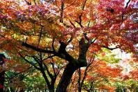 東福寺DSC_0605