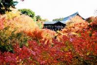 東福寺DSC_0582