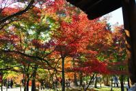 東福寺DSC_0645