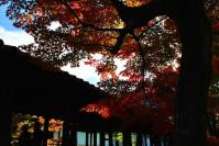 東福寺DSC_0611