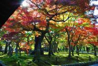 東福寺DSC_0761