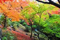 東福寺DSC_0717