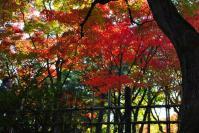 東福寺DSC_0753