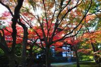 東福寺DSC_0792