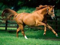 Horse120small.jpg