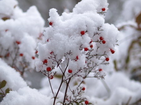 雪20100113a06