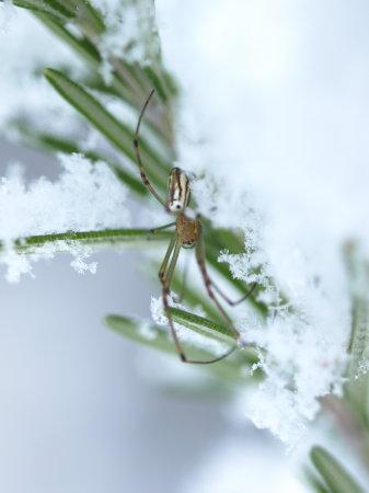 雪20100113a04