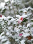 雪20100113a02