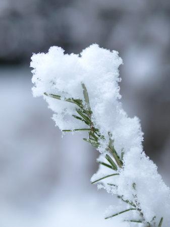 雪20100113a03