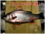 suzuki_3mai_orosi21.jpg