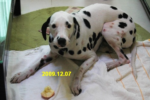 20091207 発疹3
