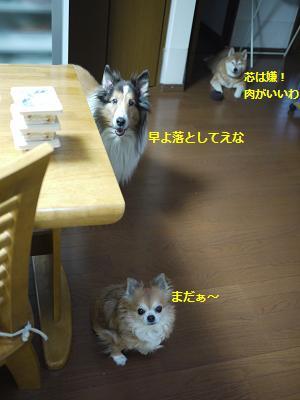 daidokoro 3