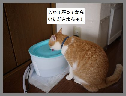 ちがい6 (1)
