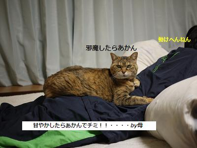 amayakasu2.jpg