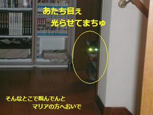 bi-mu1.jpg