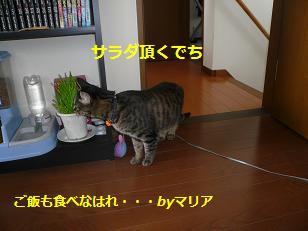 bi-mu4.jpg