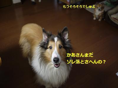 daidokoro1.jpg