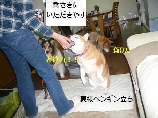 haru3.jpg