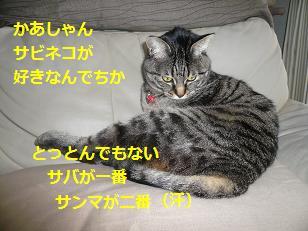 sabi3.jpg