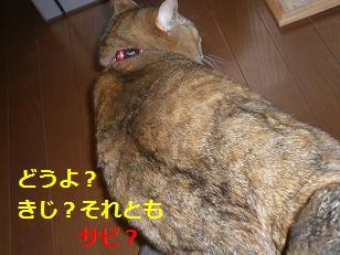 sabi4.jpg