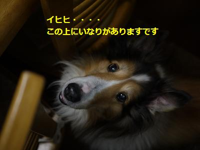 seityou1.jpg
