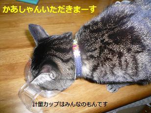 suzu3.jpg
