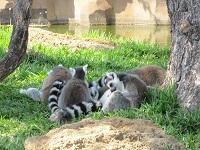 動物園ホノルル