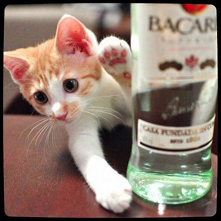 今日はラム酒っすか?