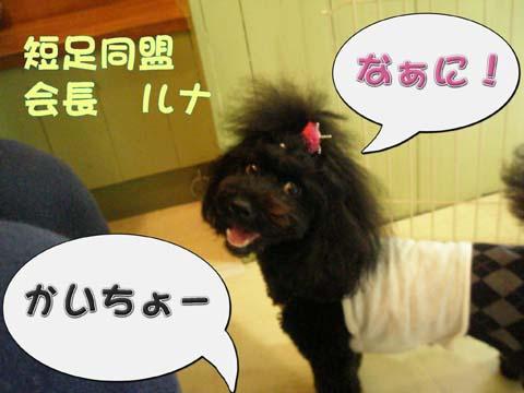 04_20110309001038.jpg