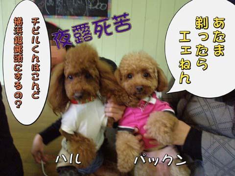 09_20110309001009.jpg