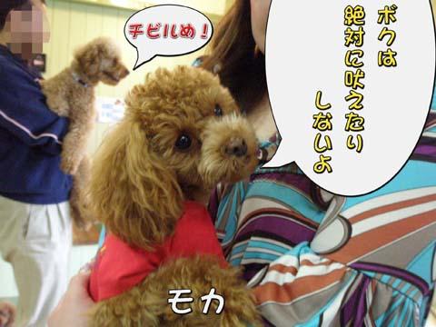 11_20110309001009.jpg