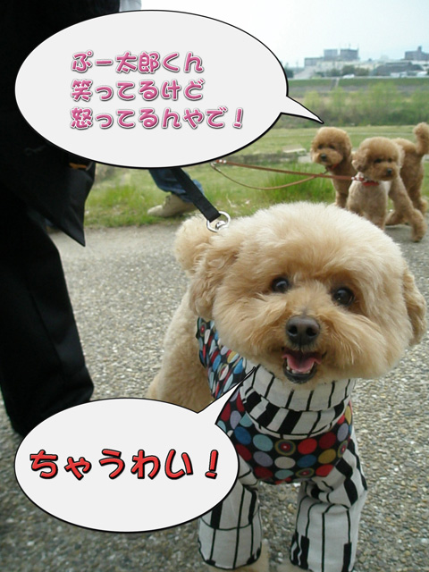 11_20110405170836.jpg