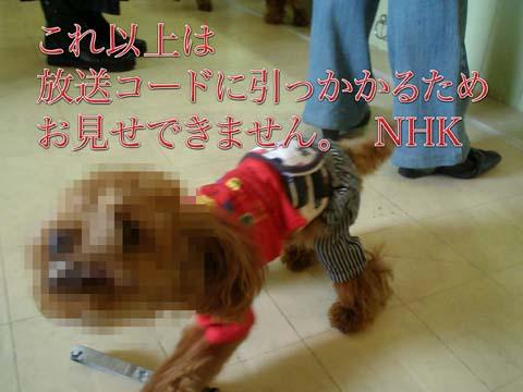 14_20110309001005.jpg