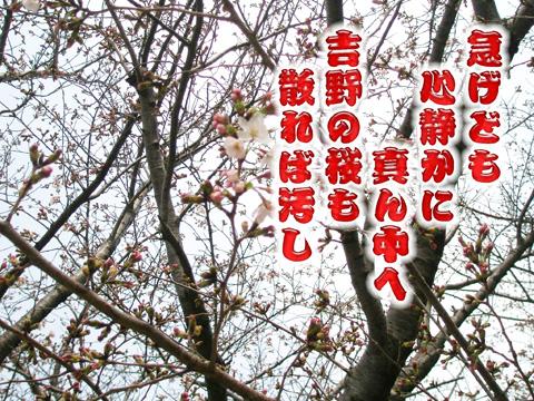 15_20110403224216.jpg